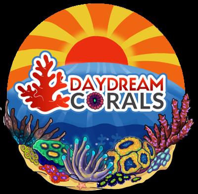 Day Dream Corals