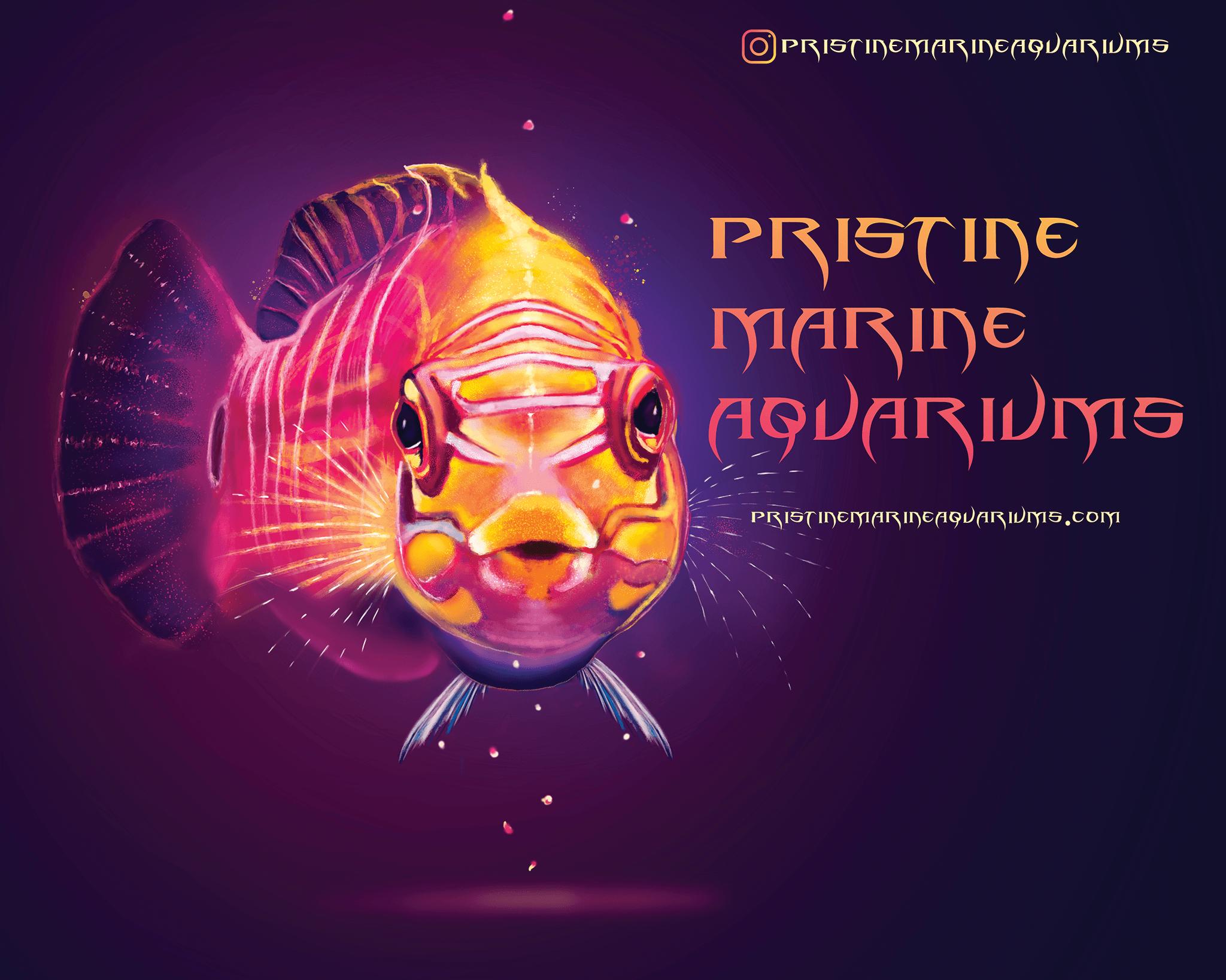 Pristine Marine Aquariums